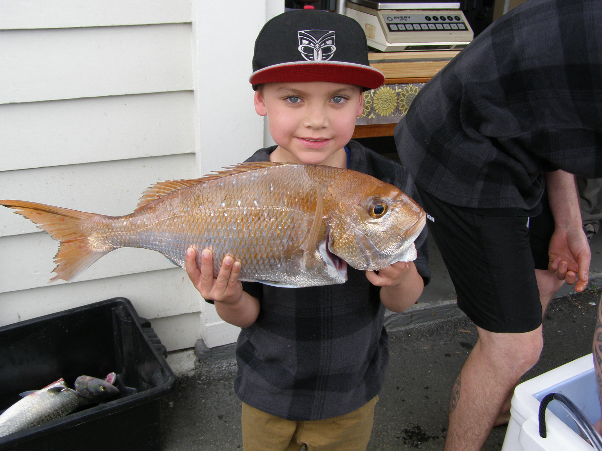Junior Snapper